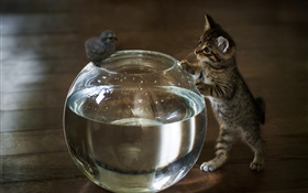 Kitten want touch aquarium water HD wallpaper
