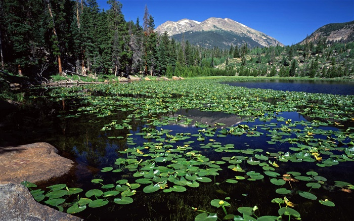 Lake, mountains, forest, water lily Wallpapers Pictures Photos Images