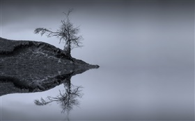 Lake, tree, water reflection, monochrome, Scotland