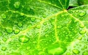 Leaf close-up, green, water drops HD wallpaper