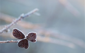 Leaves, frost, bokeh HD wallpaper