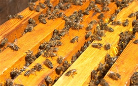 Many bees, beehive HD wallpaper
