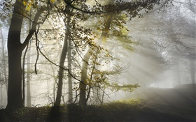 Morning, fog, trees, sun rays, autumn HD wallpaper