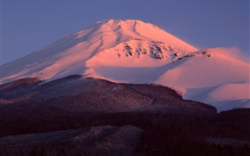 Mount Fuji, Japan, snow, dusk, forest