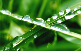 Nature close-up, green grass, leaf, water drops