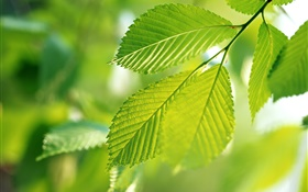 Nature, green leaves, bokeh HD wallpaper