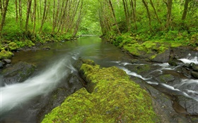 Nestucca River, Oregon, USA, moss, trees, green HD wallpaper