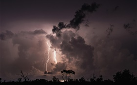 Night, clouds, storm, lightning, trees, silhouette HD wallpaper