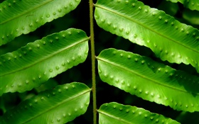 Plants green leaves close-up HD wallpaper