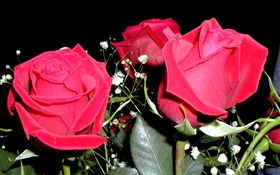 Red rose flowers, bouquet HD wallpaper