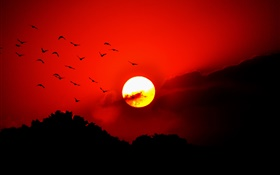 Red sky, clouds, sunset, glow, birds, silhouette HD wallpaper