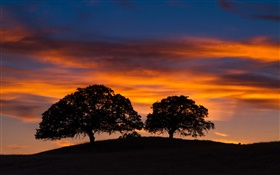 Sunset, trees, hill, red sky, black silhouette HD wallpaper