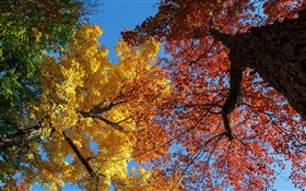 Trees, yellow and red leaves, autumn HD wallpaper