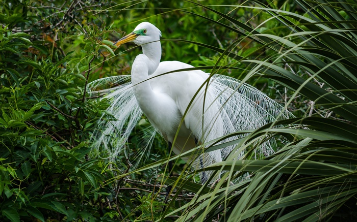 White bird, herons, green grass Wallpapers Pictures Photos Images