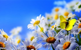 White daisy flowers, butterfly, blue sky HD wallpaper
