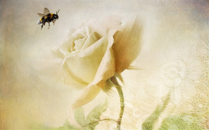 White rose, bee, texture Wallpapers Pictures Photos Images