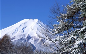 White world, winter, snow, Mount Fuji, Japan HD wallpaper