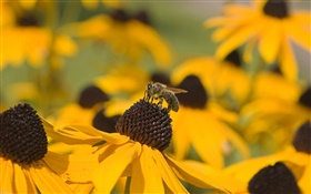 Yellow flowers, black pistil, bee HD wallpaper