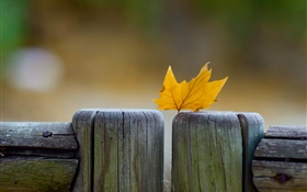 Yellow leaf, fence, autumn HD wallpaper