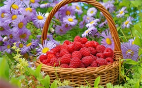 A basket red raspberries, asters flowers HD wallpaper