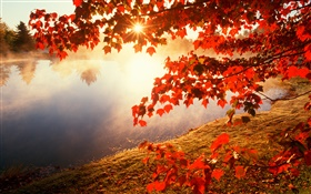 Autumn, red leaves, maple tree, river, sun rays HD wallpaper