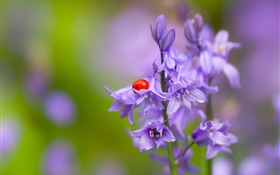 Bells flower, ladybug, beetle, insect, bokeh HD wallpaper