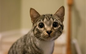 Big eyes cat look HD wallpaper