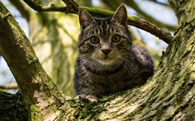 Black stripes cat in tree HD wallpaper