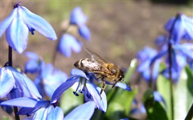 Blue flowers, bee