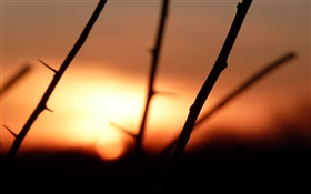 Branches, thorns, sunset