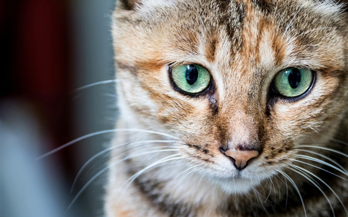 Cat portrait, green eyes, whiskers Wallpapers Pictures Photos Images