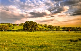 Countryside, fields, grass, trees, clouds, dusk HD wallpaper