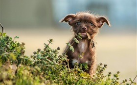 Cute puppy, grass, bokeh HD wallpaper