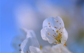 Flower petals close-up, bokeh HD wallpaper