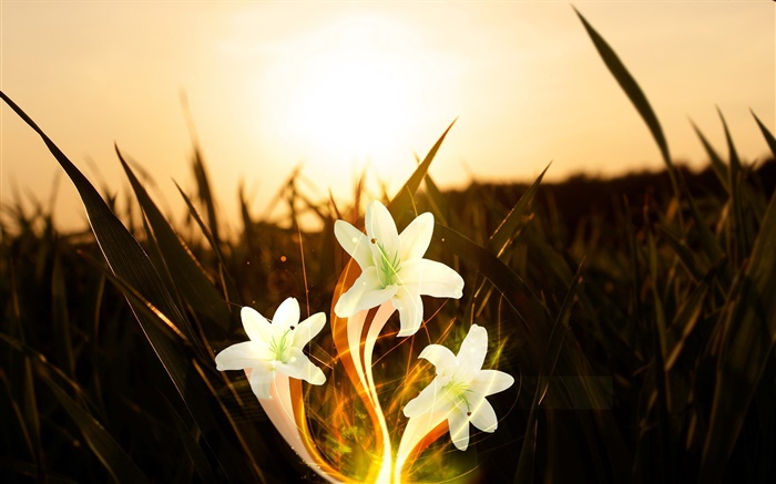 Flowers, plants, grass, sunshine, creative pictures Wallpapers Pictures Photos Images