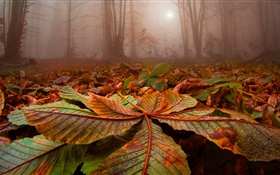 Forest, trees, fog, leaves, ground, dawn HD wallpaper