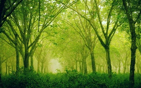 Forest, trees, green style HD wallpaper