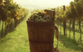 Grapes, fruits, bucket HD wallpaper
