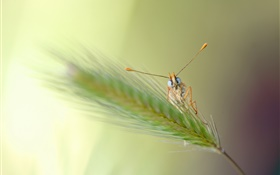 Grass, bokeh, insect HD wallpaper