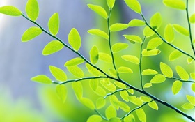 Green leaves, branches, bokeh, spring HD wallpaper