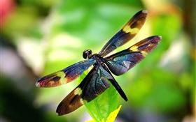 Insect close-up, dragonfly, wings, bokeh HD wallpaper