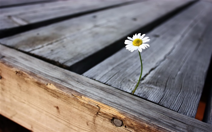 Loneliness flower, wood board Wallpapers Pictures Photos Images