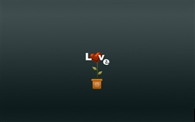 Love, flower, creative pictures HD wallpaper