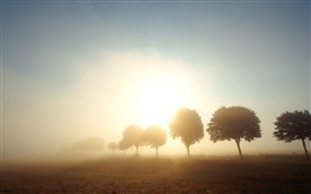 Morning, dawn, trees, fields, fog, sunrise HD wallpaper