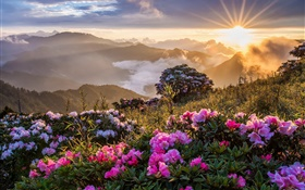 Morning landscape, sunrise, mountains, flowers, clouds