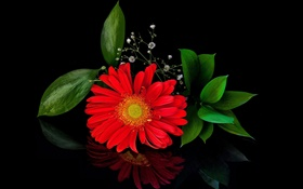 Red gerbera, flower close-up, petals HD wallpaper