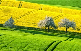 Spring beautiful rapeseed field, yellow and green, trees, Germany HD wallpaper