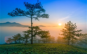 Sunrise morning, dawn, pine, fog, mountains HD wallpaper