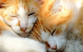 Two kittens sleeping HD wallpaper