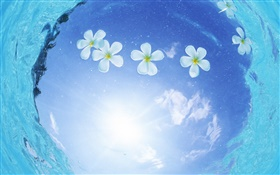White flowers in water, blue sky, sun, Maldives HD wallpaper